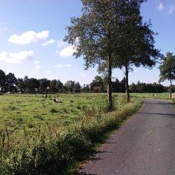 Grüne Wiesen und einsame Moorstraßen