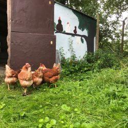 Hühner – unsere neuen Mitbewohner